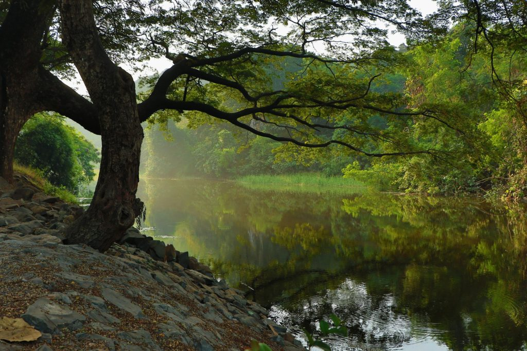 river-1030839_1920