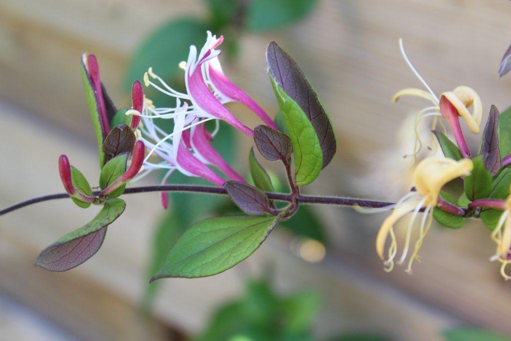 flower-2440520_1920